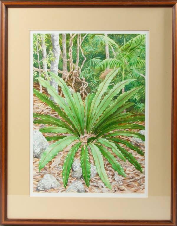 Nightcap Rainforest, Birdnest Fern on the Forest Floor by Geraldine Hum
