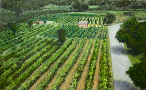 Vineyard Umbria by Roger Beale AO