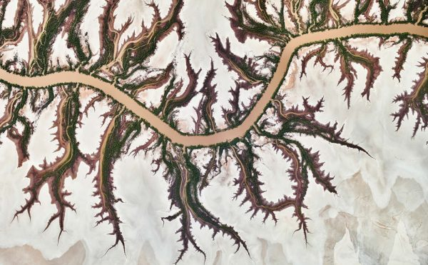 The Serpent by Andrew Vukosav